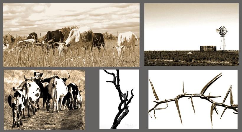 Black Amp White Photographs By Fran Jex Digital Gallery