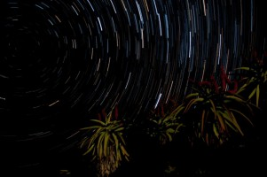 Transkei Star Trail
