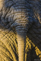 Elephant skin texture with tail
