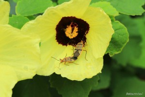 Two Beetles on a Yellow Flower