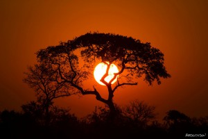 Red sunset with a silhoutted tree