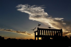 Park Bench Silhouetted Against a Cloudy Sunset With Birds
