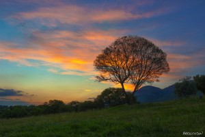 HDR sunset with tree in the Magaliesburg