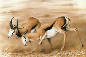 Sparring Springbok Africa Oil painting Antelope Wildlife