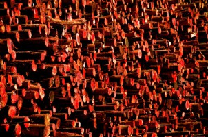 Red logs 2