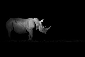 Rhino Shadow and light